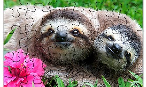 Sloth Photo Jigsaw Puzzles For An Inside Sloth Day