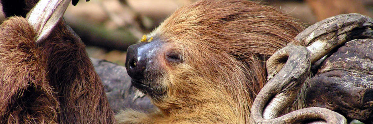 Just Slothing Around - Home Slider