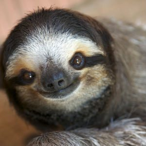 Sloth Fun Facts - Feature Image