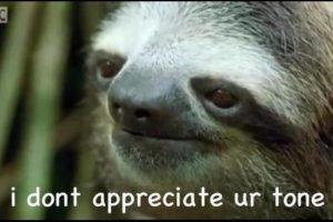 Sloth Meme - I Don't Appreciate Your Tone