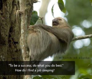 Sloth Meme - To Be A Success, Do What You Do Best. How Do I Find A Job Sleeping?