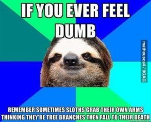 Sloth Meme - If You Ever Feel Dumb, Remember Sometimes Sloth Grab Their Own Arms Thinking They're Tree Branches Then Fall To Their Death.
