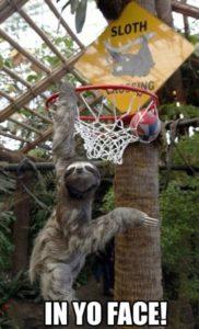 Sloth Meme - In Yo Face!