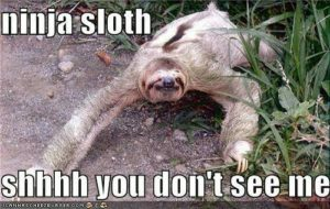 Sloth Meme - Ninja Sloth, Shhhh You Don't See Me.