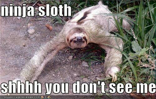 Sloth Meme Ninja Sloth sloth meme ninja sloth just slothing around
