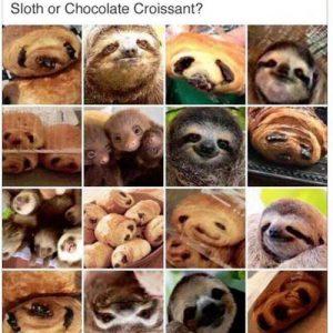 Sloth Meme - Sloth Or Chocolate Croissant?