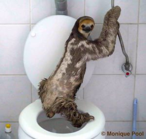 Sloth Meme - Sloth Standing On Top Of A Toilet.