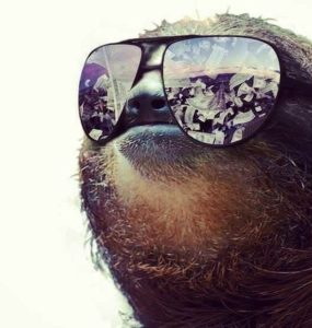 Sloth Meme - Sloth With Swag Wearing Sunglasses.