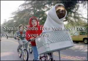 Sloth Meme - Stealing Sloths From Your Local Zoo To Raise As Your Own.