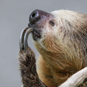 Sloth Video - Feature Image
